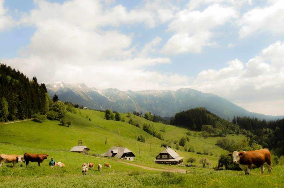 Falkensteinalm-Neuberg-an-der-Muerz-Panorama-1